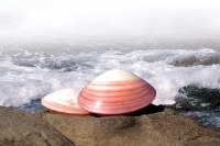 lava-shell